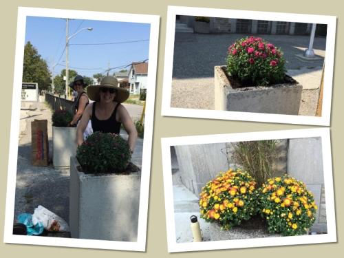 Volunteers and Plants
